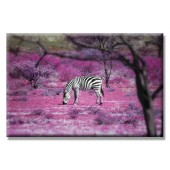 Freedom Zebra Modern Canvas Print Ben Heine Cute Animal Giclee Artwork 24 x 36 Inch