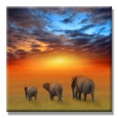 Elephant Family Modern Canvas Print Ben Heine Cute Wild Animal Giclee Artwork 24 x 24 Inch
