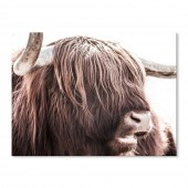 Canvas Wall Art Animal Highland Cattle Wall Pictures Giclee Print on Canvas Stretched 24 x 36 Inch