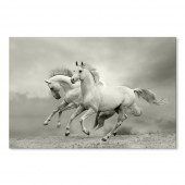 Canvas Wall Art Animal Horses in Summer Wall Pictures Giclee Print on Canvas Stretched 24 x 36 Inch