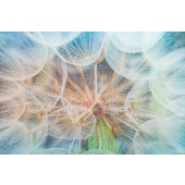 Canvas Wall Art Landscape Inside Dandelion Wall Pictures Giclee Print on Canvas Stretched 24 x 36 Inch