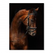 Canvas Wall Art Animal Racehorse Portrait Wall Pictures Giclee Print on Canvas Stretched 24 x 36 Inch