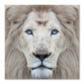 Modern Canvas Wall Art Animal White Lion Wall Pictures Giclee Print on Canvas Stretched 32 x 32 Inch